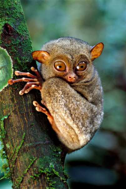 25-ask-polly-monkey.w245.h368.2x