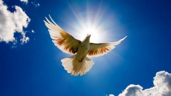 Free-Bird-700x393